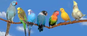 лечение птиц в москве