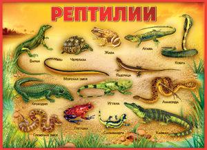 лечение рептилий в москве