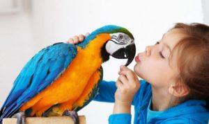 ветеринар для попугая ара