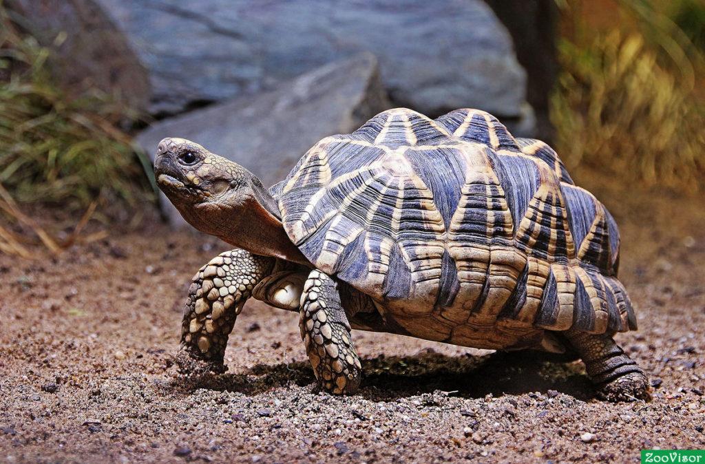 ветеринар для черепахи в москве